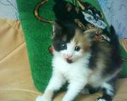 Обаятельный котёнок