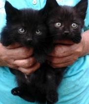 Отдам замечательных котят в добрые руки