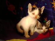 Котята в добрые руки от кротоловки