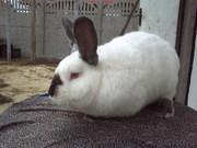 мясо кролика всегда в наличии