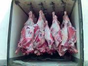 куплю говядину оптом до 4т