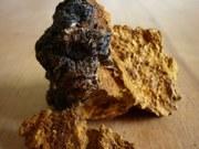 Нужен сушеный гриб чага оптом,  сушеные сморчки потом