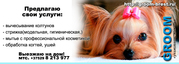 Гигиеническая стрижка собак и кошек в Бресте. Groom-brest.ru