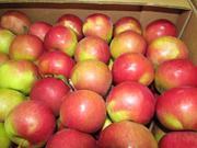 Яблоки Белорусские от производителя!