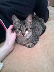 Найден котенок 5-6 месяцев на ул. Радужной (Березовка)