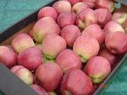 Продам яблоко польское очень хорошего качества