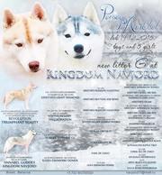 Предлагаются к продаже щенки Сибирский Хаски