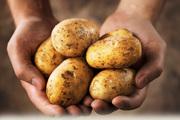 Продам картофель мелкий отборный!