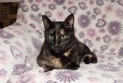 Кошка Румба,   стерилизована.