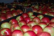 Яблоки Польша с дисконтом. ОПТ