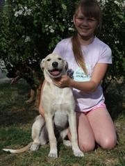 Ласковая, собака-улыбака, Перси, в добрые руки!